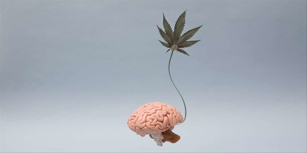 retard-cerveau-cannabis-obsession-addict