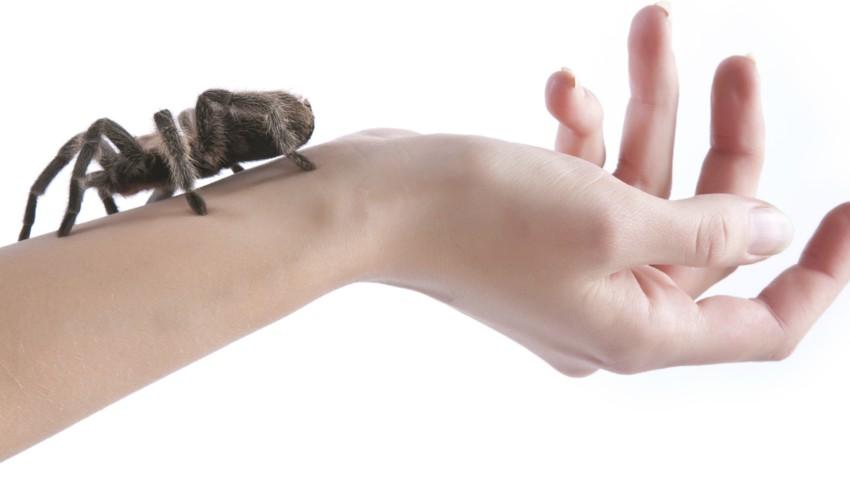 phobies-d ou viennent-elles-origines-traitement-obsession addict-6