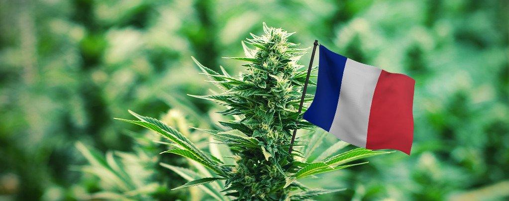legislation-cannabis-france-obsession-addict